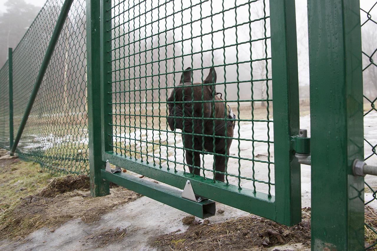 Baxter vid nedre grinden.
