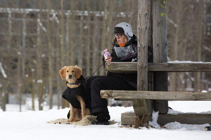 Valpen Milo blivande servicehund