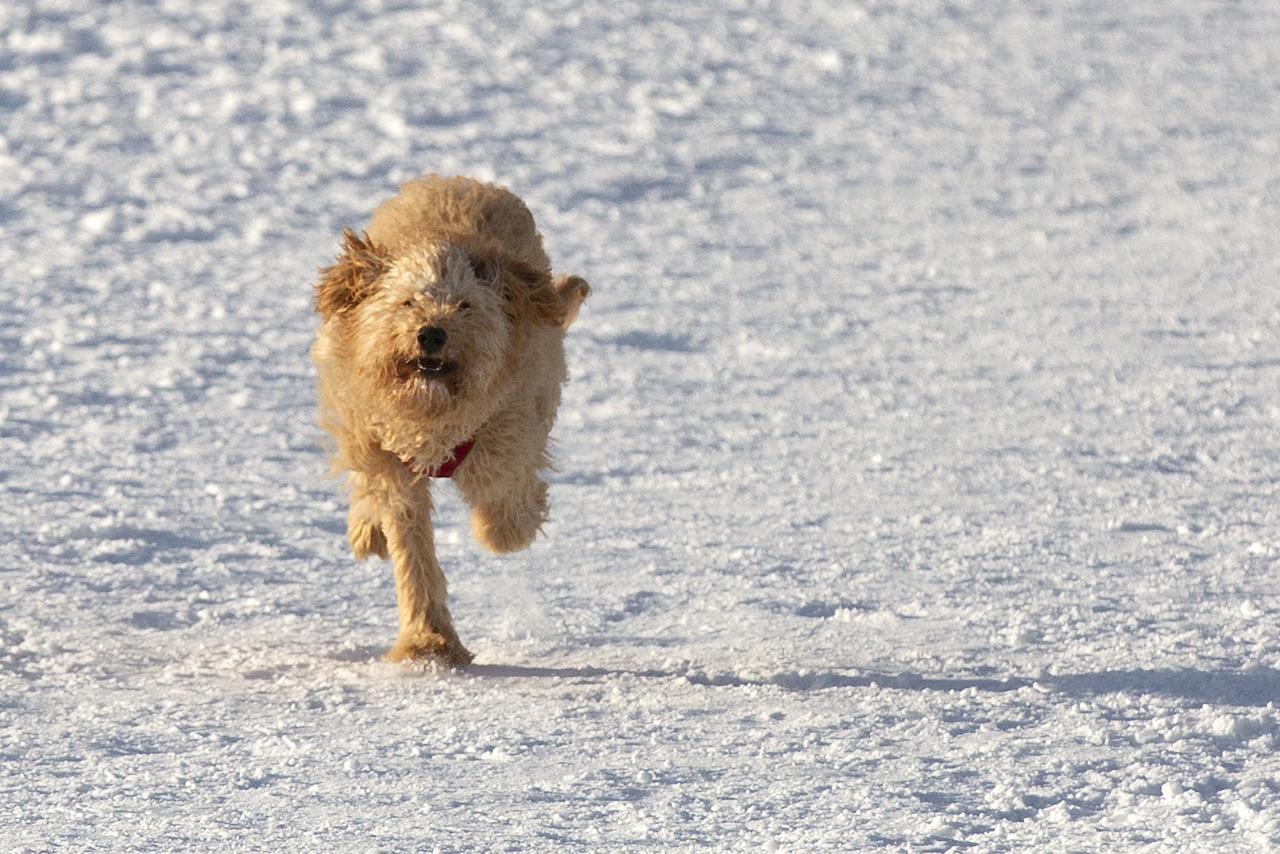 Teddy tar i när han springer