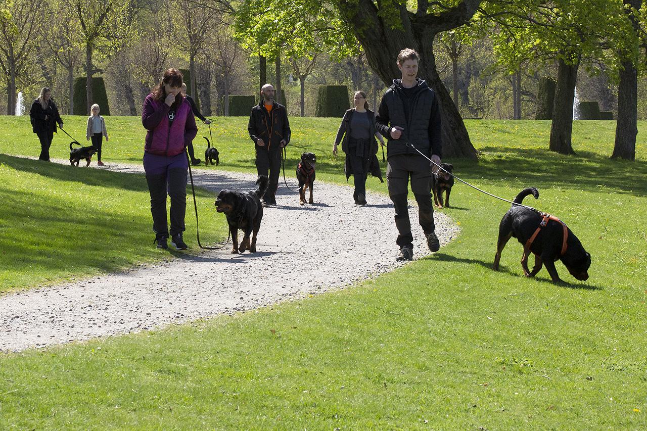 Slottsparkspromenad Rottweiler