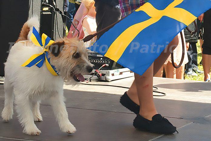 pojke och hund med svenska flaggan