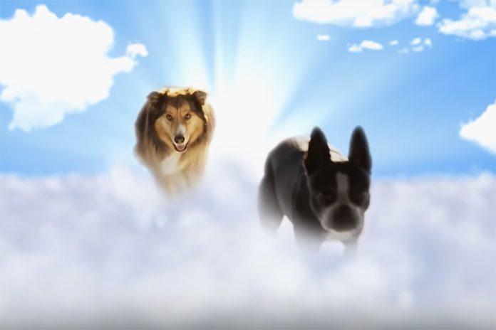 Best Friend from Heaven - Filmtips